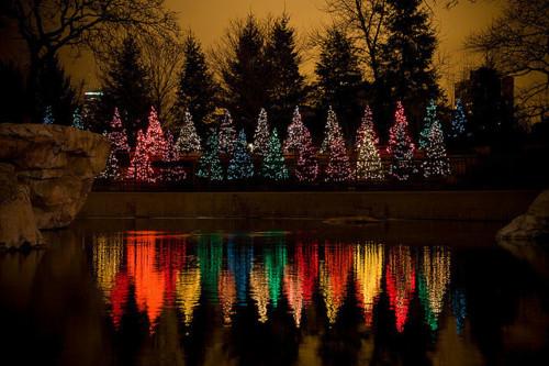 Christmas Trees LGBT Rainbow