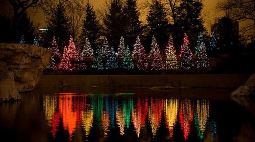 Christmas Trees LGBT Rainbow